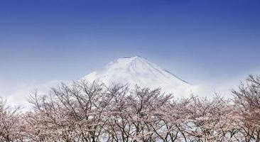 zet fuji en de roze bomen van de kersenbloesem in de lente, japan op foto