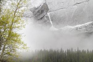 lente en sneeuw in het nationale park van jasper