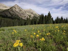 East Beckwith Mountain door Kebler Pass foto
