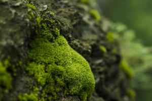 mos waterval op de berg