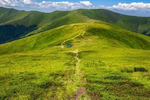 meertje op een groene heuvel