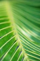 abstracte tropische aard: exotische macro van groen palmblad