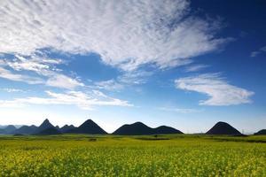 koolzaad veld met berg, china