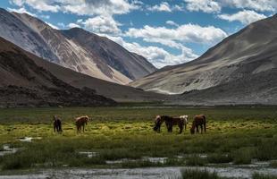 paarden op weiland tussen bergen
