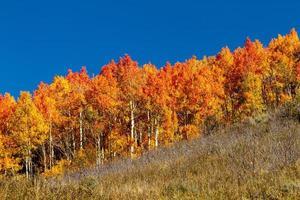 daling van Steamboat Springs Colorado