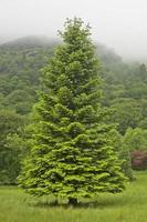 zomer berglandschap met grote dennenboom, europa, uk