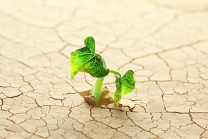 plant die in de woestijn ontspruit foto