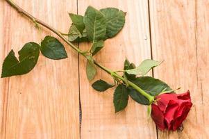 rode roos op vintage houten planken achtergrond foto