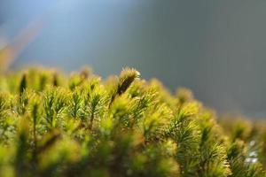 oude boomschors met mos erop