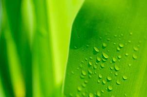 druppels water op het groene blad van de oppervlakte foto