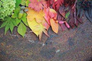 herfstbladeren achtergrond foto