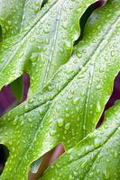 abstracte close-up van groene plant blad met waterdruppeltjes foto