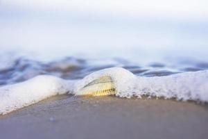 clam en oceaan foto