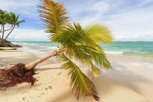 Caribisch strand. foto