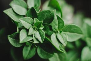 decoratieve planten foto