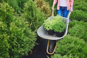 planten vervoeren foto