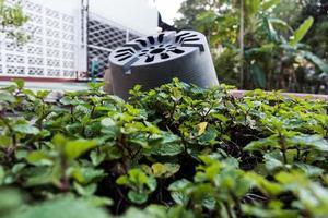 plantenpotten foto