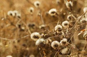 herfst plant