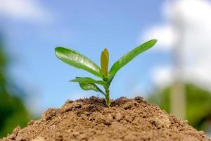 zaaiende plant