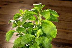 kleine stevia plant foto