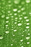 blad met waterdruppels