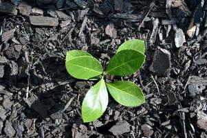 kleine plant groeit