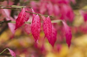herfst paarse plant