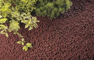 groene planten groeien foto