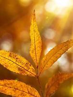 mooie herfstbladeren foto