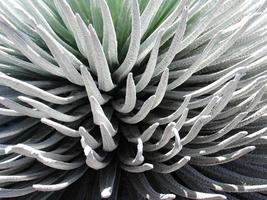 close up van plant