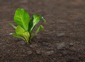plant op de grond foto