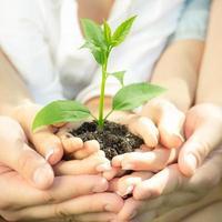 jonge plant in handen foto