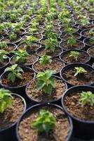 plant jonge boompjes in potten foto