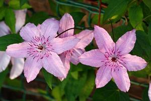 bloemplanten in de tuin.