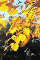 boomtak met herfstbladeren foto