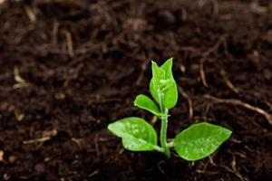 jonge plant groeit uit de grond foto
