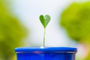 groene plant in de vorm van een hart foto