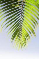 bladeren van palmboom
