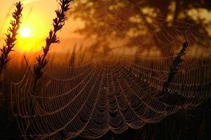 web in het licht van de rijzende zon