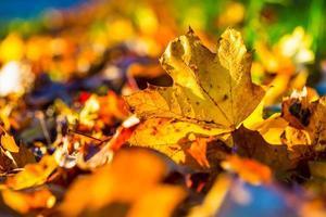 herfstbladeren in herfstkleuren en lichten