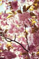 bloemen en planten foto