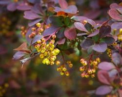 bloemen en planten, molinos, teruel, aragon, spanje foto