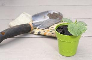 baby komkommer plant met schop en handschoen foto