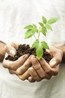man handen met een kwetsbare groene jonge plant met zorg. foto