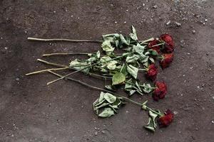 verdorde rozen