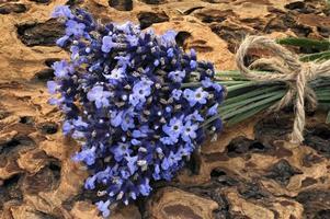 lavendel - bloemen op houtschors