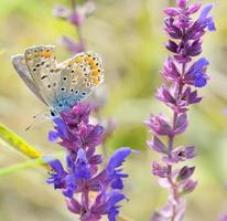 vlinder op roze bloemontwerp