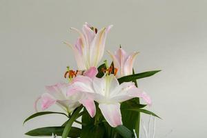 boeket van roze leliebloem