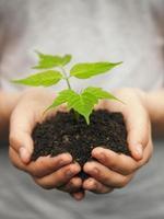 jongen handen met jonge plant foto