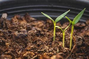 jonge groene plant in de bodem foto